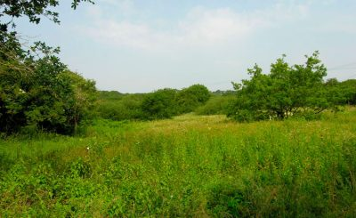 Barlands Common