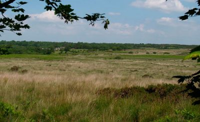 Clyne Common