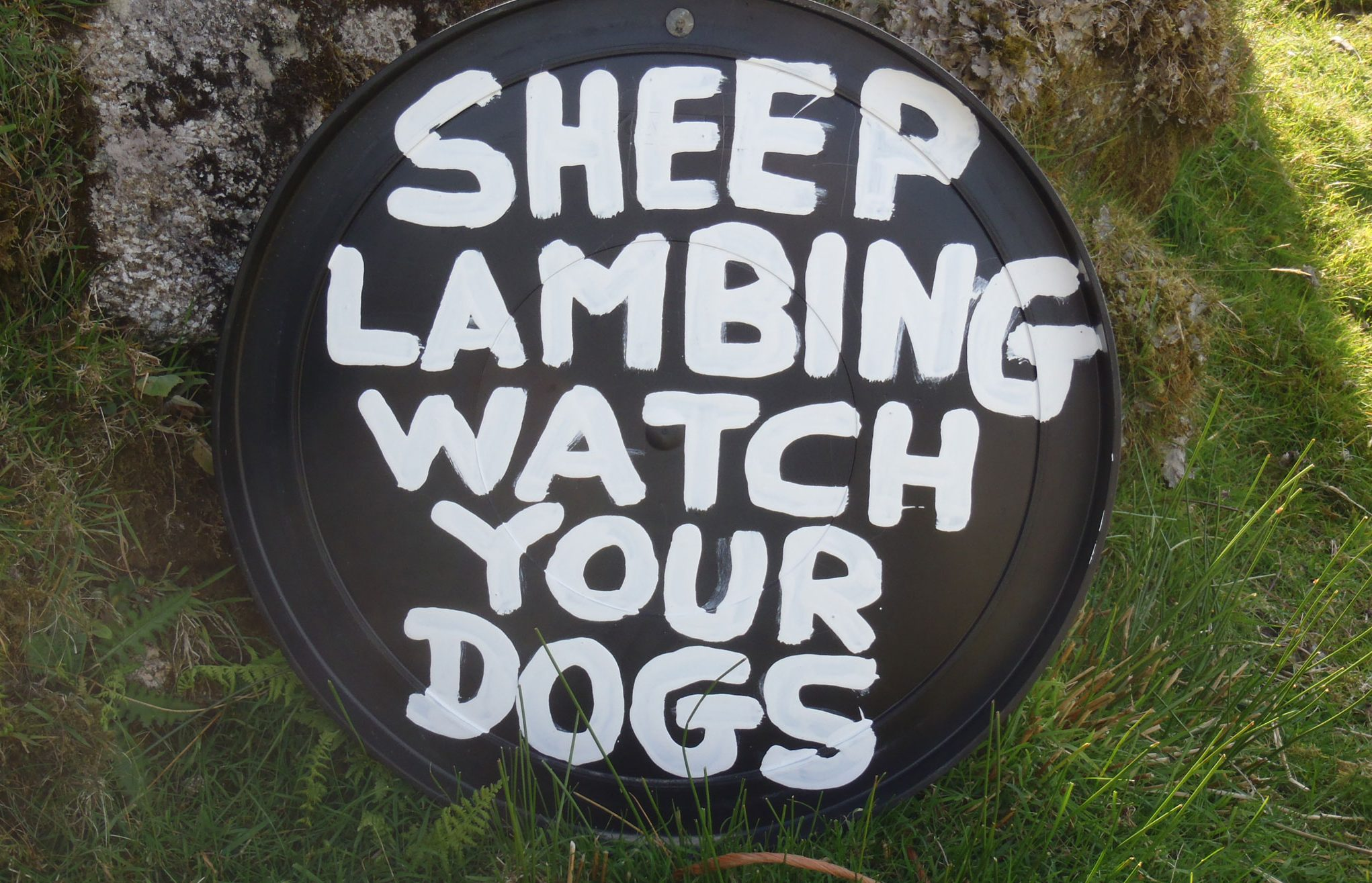 Sheep-lambing-sign