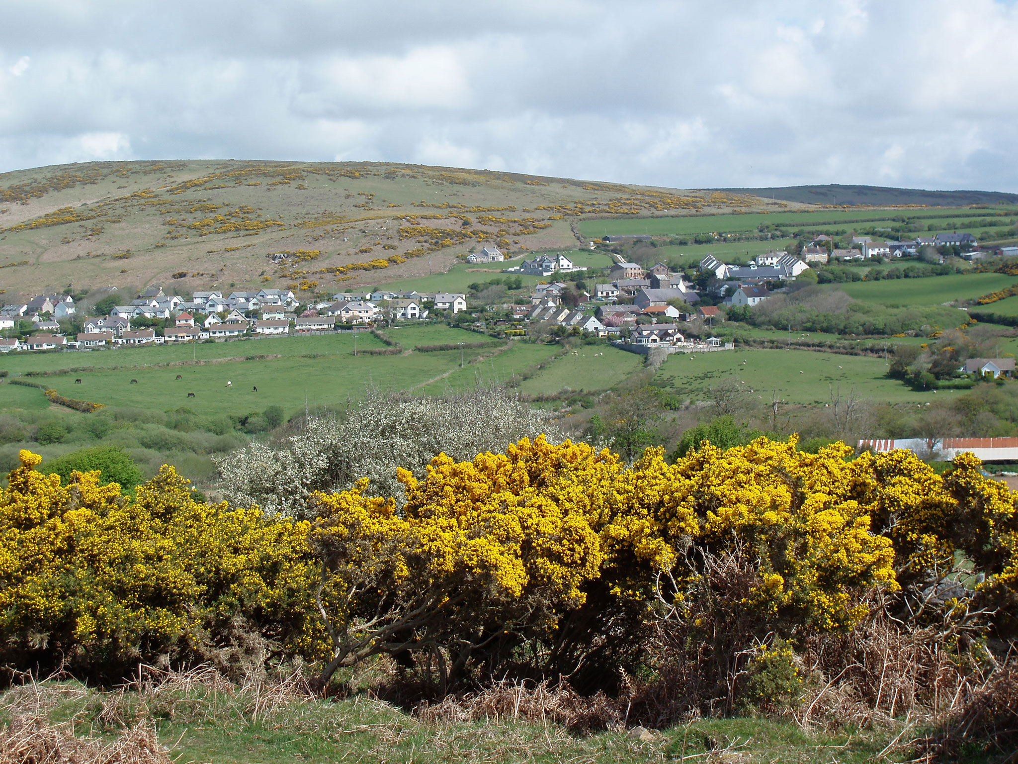 gorse-on-gower-commons