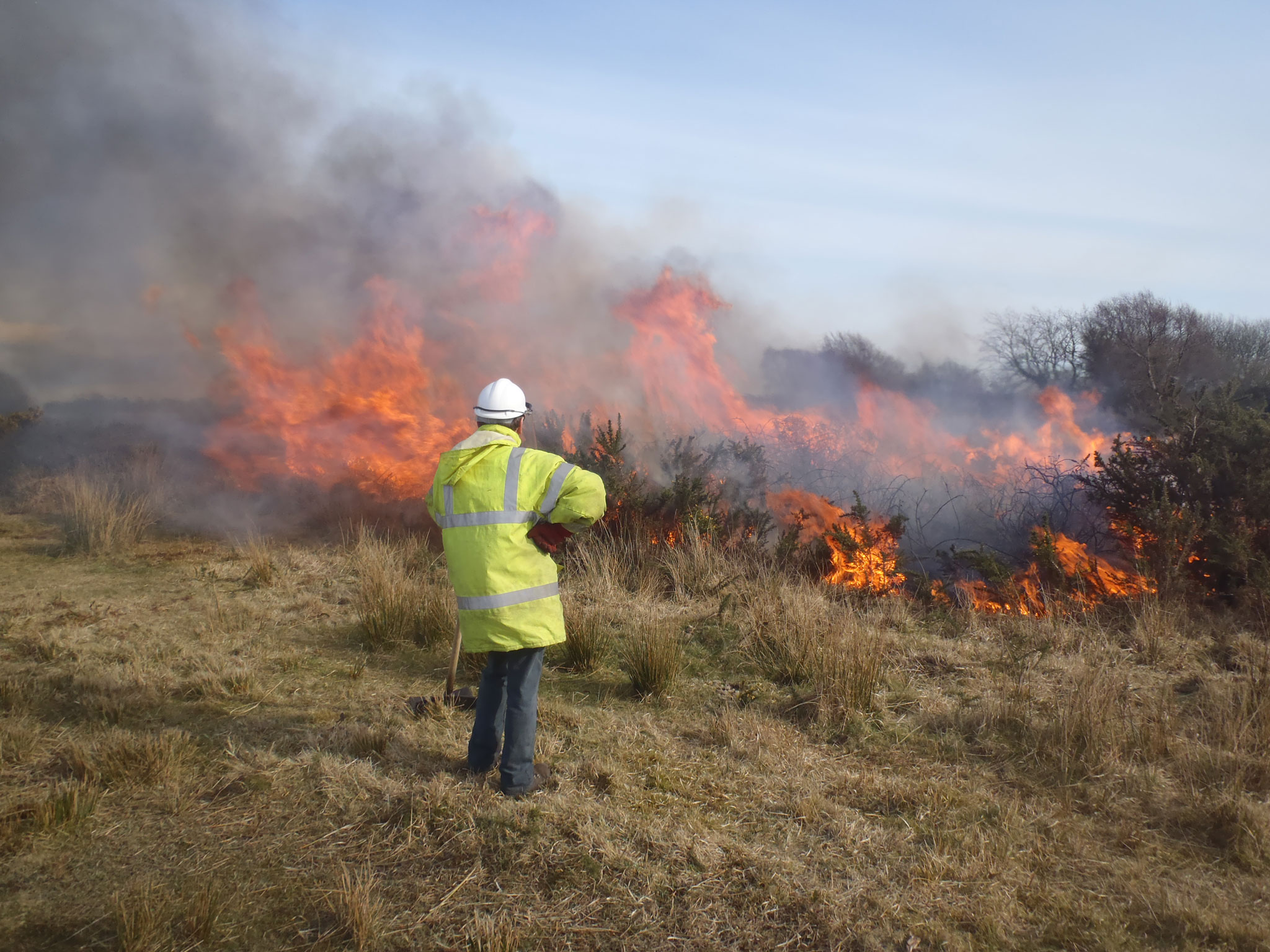 gower-controlled-gorse-burn
